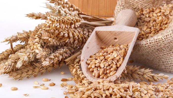 Польська компанія шукає українських постачальників фуражного та продовольчого зерна